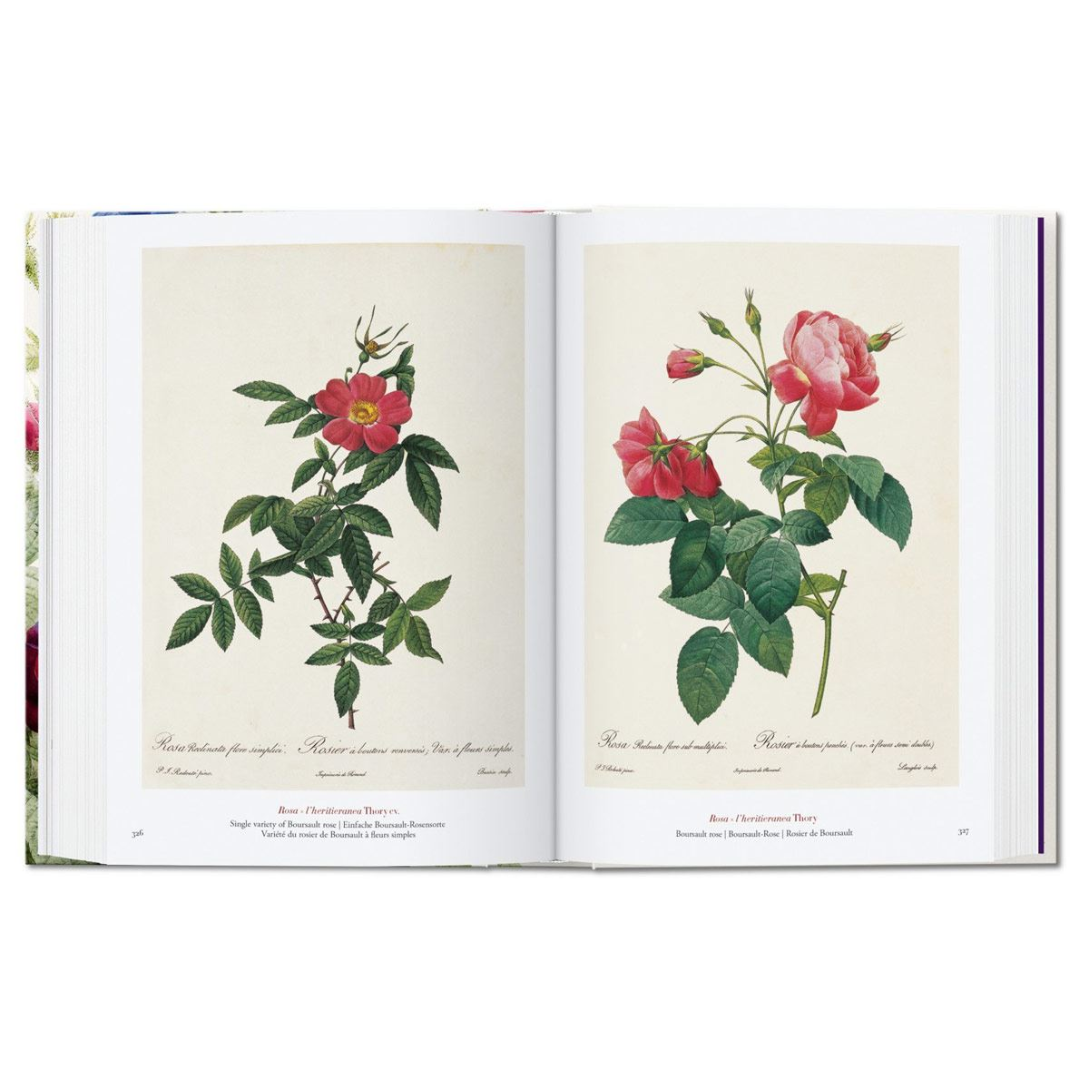 El libro de las flores. 40th Aniversario