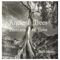Ancient Trees: Portraits of Time - Sanborns